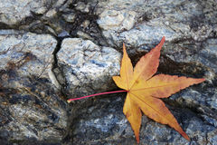 Yellow maple leaves on the stone Royalty Free Stock Photos