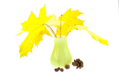 Yellow maple leaves in a vase Royalty Free Stock Images
