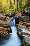 Yellow maple trees with Autumn mountain creek. Autumn creek closeup with yellow maple trees and foliage on rocks in forest with tree branches Royalty Free Stock Image