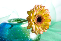Yellow Margarita Flower. Yellow margharita flower in a colorful vase isolated on white background Royalty Free Stock Photos