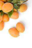Yellow marian plum fruit Stock Photography