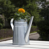 Yellow marigold in an aluminum pitcher Royalty Free Stock Image