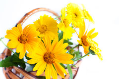 Yellow marigold close up, bouquet in the basket Royalty Free Stock Photos