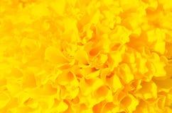 Yellow marigold Royalty Free Stock Photography
