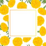 Yellow Marigold on White Banner Card. Vector Illustration Royalty Free Illustration