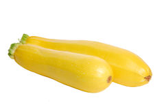 Yellow marrow squash Royalty Free Stock Image