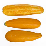 Yellow marrows Royalty Free Stock Images