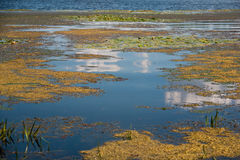 Yellow marsh under cloudy sky. Summer marsh under cloudy sky royalty free stock image