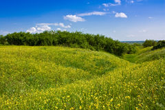 Yellow meadow Stock Photos