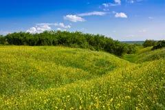 Yellow meadow Stock Photos