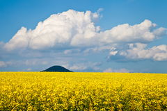 Yellow meadow Royalty Free Stock Image