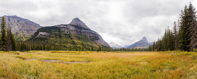 Yellow meadow beneath Citadel Mountain - Glacier National Park Stock Photo