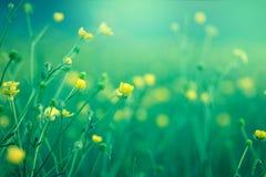 Yellow meadow flower Stock Photos