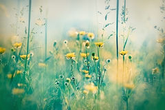 Yellow meadow flowers Royalty Free Stock Images