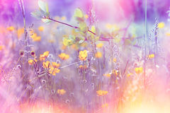 Yellow meadow flowers made with color filters. Yellow meadow flowers in spring made with color filters Royalty Free Stock Photo