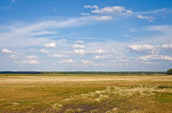 Yellow meadow on hot summer day. Russia royalty free stock photo