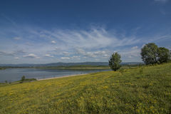 Yellow meadow near Milada lake. In summer hot day Royalty Free Stock Images