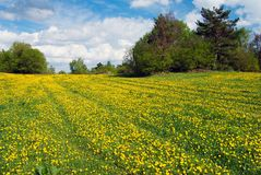 Yellow meadow and sky with beautiful clouds Stock Photos