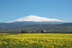 Yellow Meadow, Snowy Mount Etna And Blue Sky Stock Photo