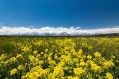 Yellow meadows at grand teton national park Stock Photos