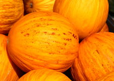Yellow melon crop Royalty Free Stock Photography