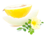 Yellow melon with flower of Dog Rose Royalty Free Stock Photos