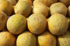 Yellow melon fruits market stacked rows Royalty Free Stock Photo