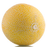 Yellow melon Stock Image