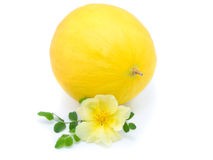 Yellow Melon With Flower Stock Photo