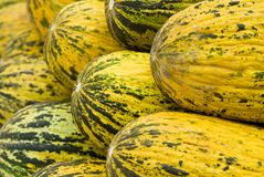Yellow Melons. A group of yellow melons well organized Stock Image