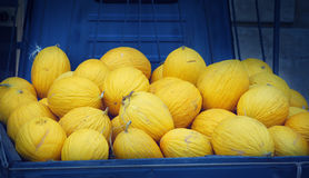 Yellow melons harvest Stock Photo