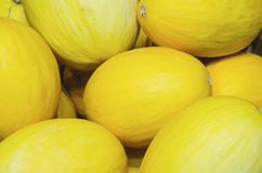 Yellow melons stacked for retail sale royalty free stock photo