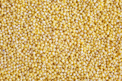 Yellow millet Royalty Free Stock Photo