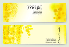 Yellow mimosa spring flowers vertical garland on white background. Horizontal banner with flowering acacia Royalty Free Stock Photo