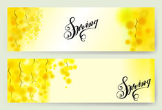 Yellow mimosa spring flowers vertical garland on white background. Horizontal banner with flowering acacia Royalty Free Stock Photos