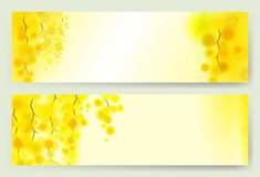 Yellow mimosa spring flowers vertical garland on white background. Horizontal banner with flowering acacia Stock Image