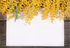 Yellow mimosa on wooden boards Stock Image