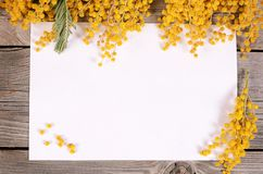 Yellow mimosa on wooden boards Stock Photos