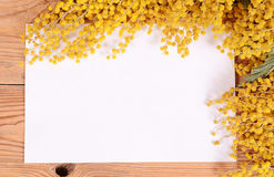 Yellow mimosa on wooden boards Stock Photo