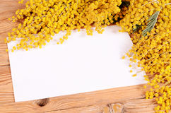 Yellow mimosa on wooden boards Stock Images