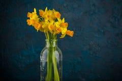Yellow miniature daffodils Stock Photos