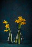 Yellow miniature daffodils Royalty Free Stock Photography