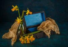 Yellow miniature daffodils Royalty Free Stock Photo