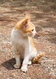 Yellow mongrel cat sitting on ground. Looking foward action. Royalty Free Stock Photos
