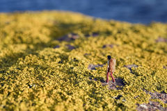 Yellow moss Royalty Free Stock Photography