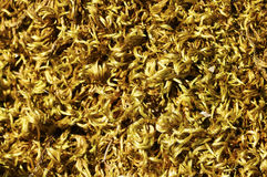 Yellow moss background Stock Photography