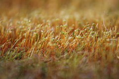 Yellow moss being bathed with sunset light Stock Photo