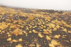 Yellow Moss on Mount Etna. The Etna volcano crater. Black Volcanic Earth, Volcanic Lava and Stones. Dense Fog on Mount Etna. Place for Text. The island of royalty free stock photo
