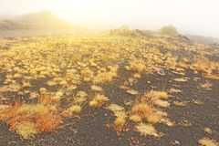 Yellow Moss on Mount Etna. The Etna volcano crater. Black Volcanic Earth, Volcanic Lava and Stones. Dense Fog on Mount Etna. Place for Text. The island of stock image