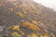 Yellow Moss on Mount Etna. The Etna volcano crater. Black Volcanic Earth, Volcanic Lava and Stones. Dense Fog on Mount Etna. Place for Text. The island of royalty free stock image